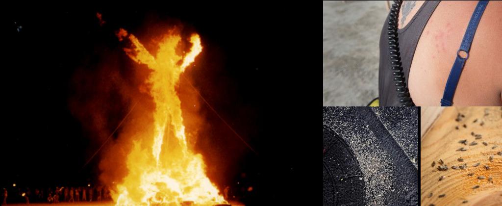 BurningMan bichos